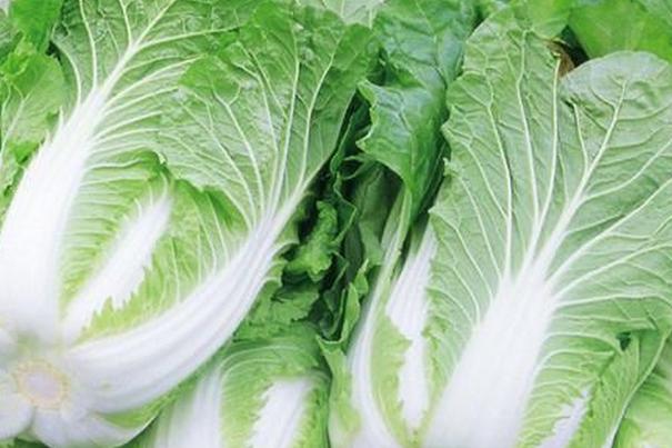 果蔬百科怎么挑选大白菜